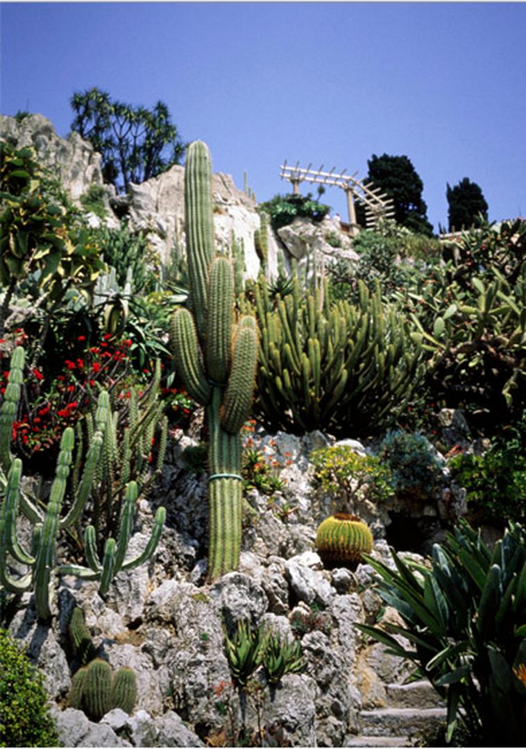 Le jardin exotique et la grotte de l 39 observatoire monaco for Boulevard du jardin exotique
