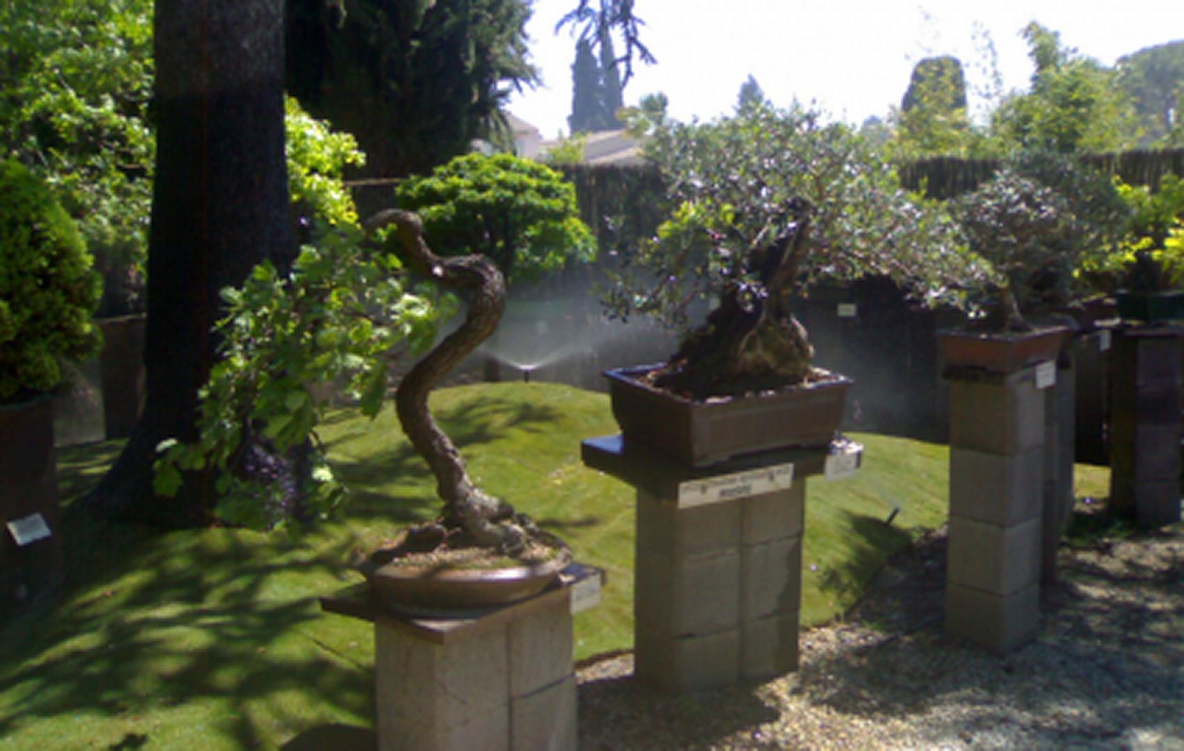 musee-du-bonsai-a-biot