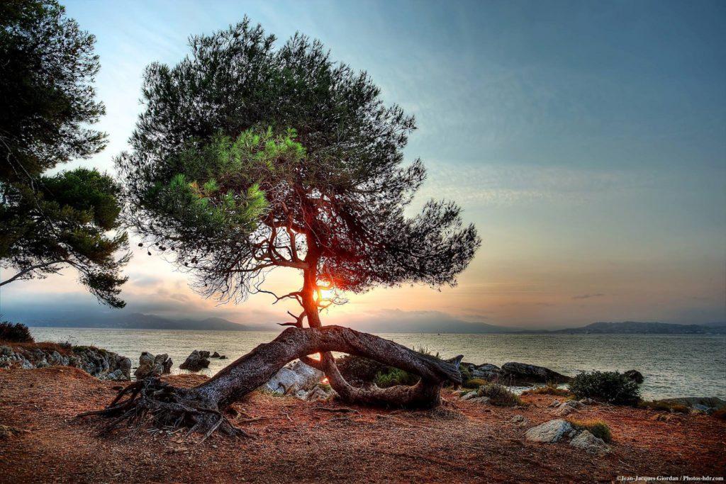 Saint-Honorat -  l'île aux moines de Cannes2