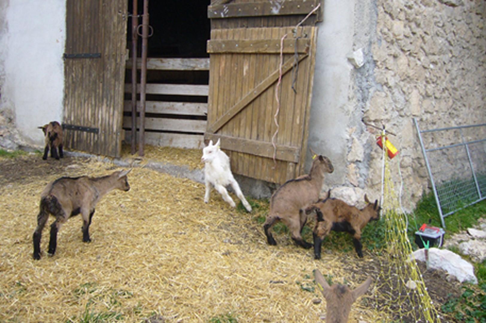 La ferme des Courmettes - Tourrettes sur loup 2