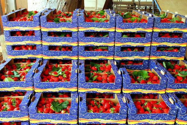 fete des fraises carros