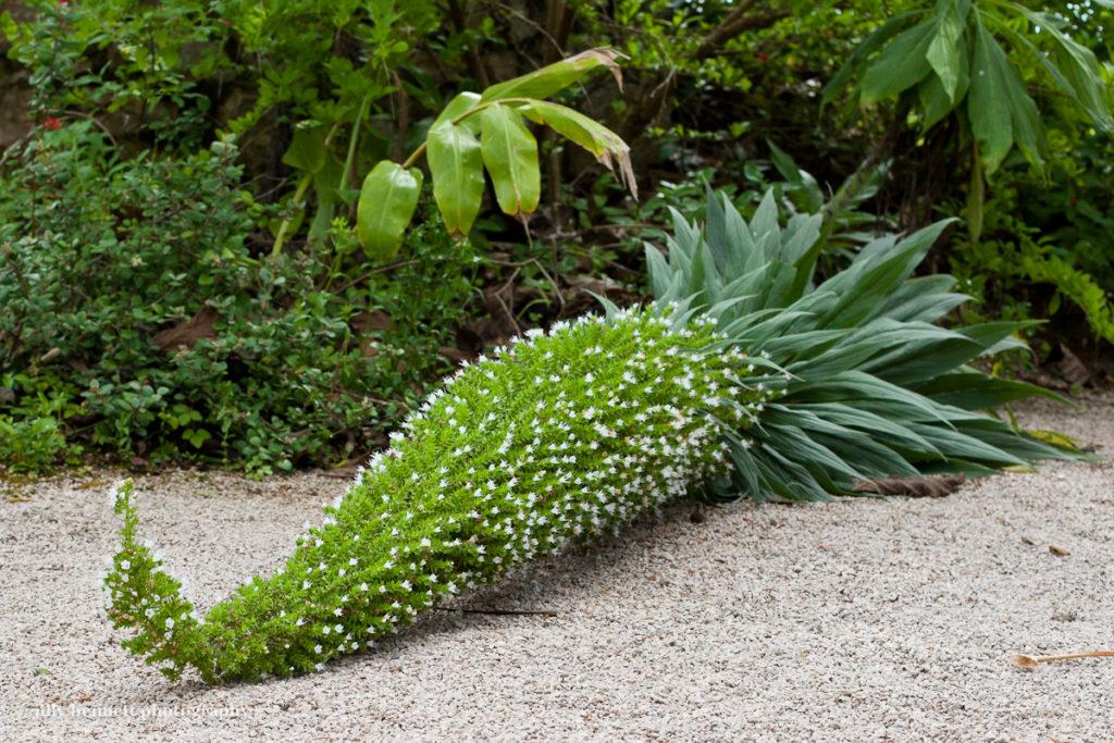 Plante tropicale pour jardin for Plantes pour bordures de jardin