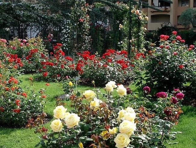 Le parc paysager de Fontvieille et la Roseraie Princesse-Grace 3